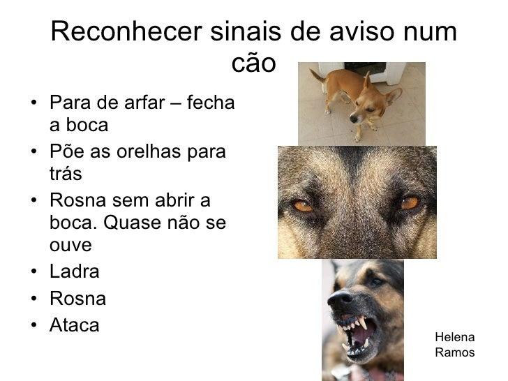 Reconhecer sinais de aviso num cão <ul><li>Para de arfar – fecha a boca </li></ul><ul><li>Põe as orelhas para trás </li></...