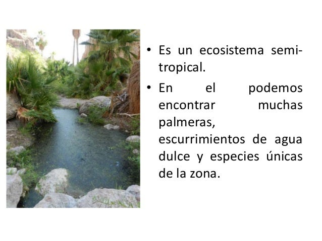 • Es un ecosistema semitropical. • En el podemos encontrar muchas palmeras, escurrimientos de agua dulce y especies únicas...