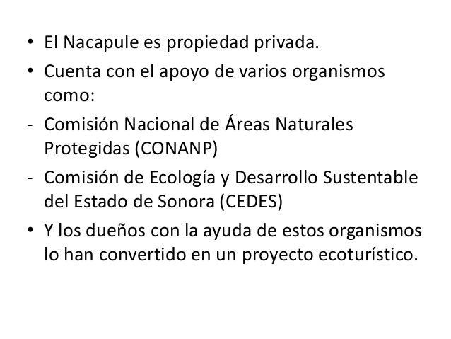 • El Nacapule es propiedad privada. • Cuenta con el apoyo de varios organismos como: - Comisión Nacional de Áreas Naturale...
