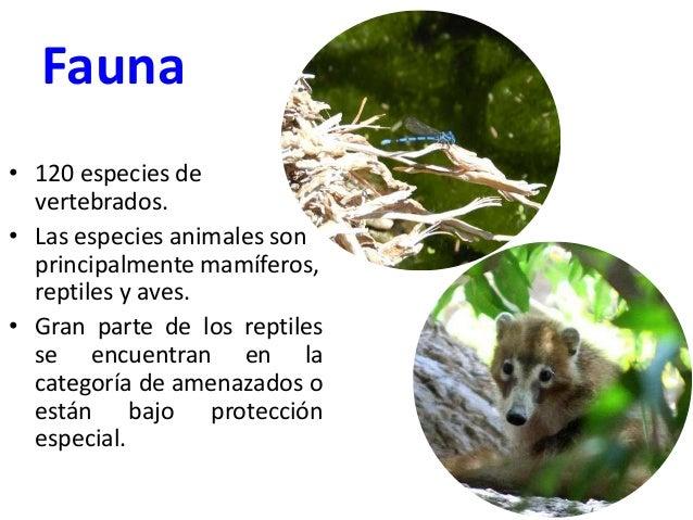 Fauna • 120 especies de vertebrados. • Las especies animales son principalmente mamíferos, reptiles y aves. • Gran parte d...