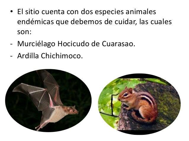 • El sitio cuenta con dos especies animales endémicas que debemos de cuidar, las cuales son: - Murciélago Hocicudo de Cuar...
