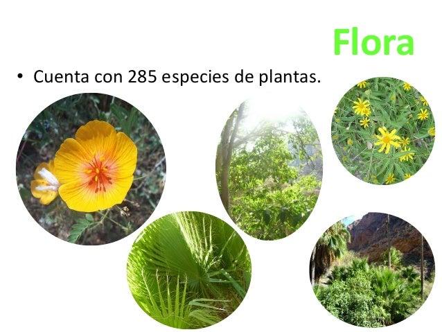 • Cuenta con 285 especies de plantas.  Flora