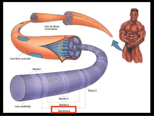 2   TRIADARETICULOSARCOPLASMICO
