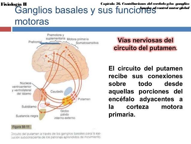 FISIOLOGÍA II; Contribuciones del cerebelo y los ganglios basales al …