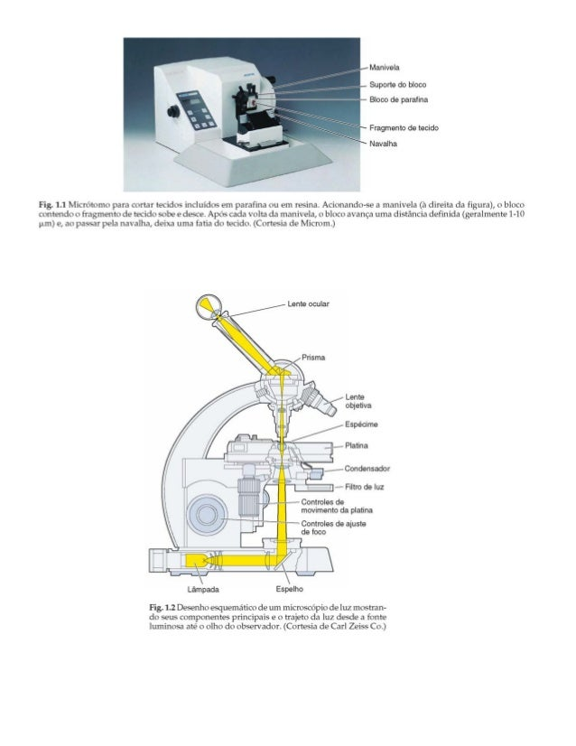 MICROSCÓPIOS-TIPOS. MÉTODOS PARA OBSERVAÇÃO DE CÉLULAS