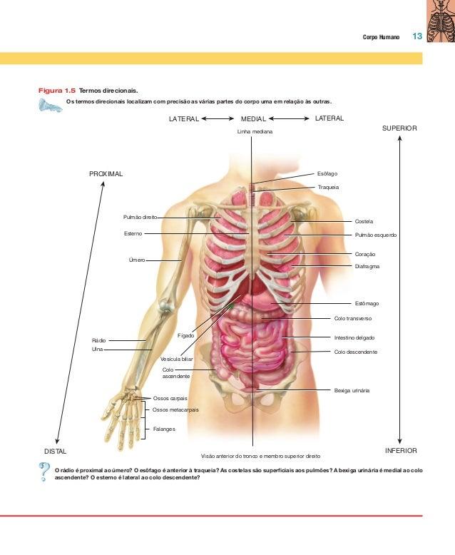 Foto corpo humano interno 90