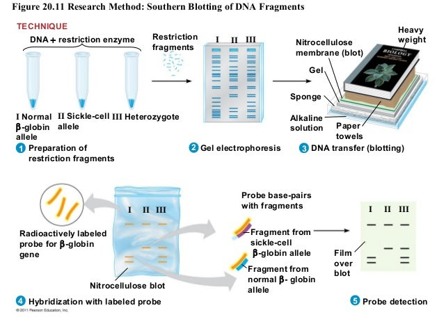 Biotecnolog 237 A