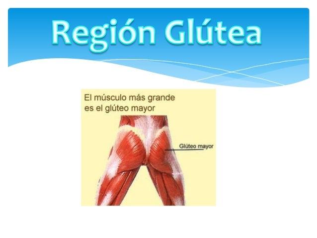 Inervada por D12 a S3. A través de los nervios glúteo superior, medio e inferior. Las ramas cutáneas externas de los nervi...