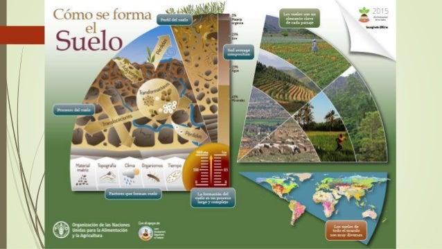 Factores de formaci n de los suelos for Formacion de los suelos
