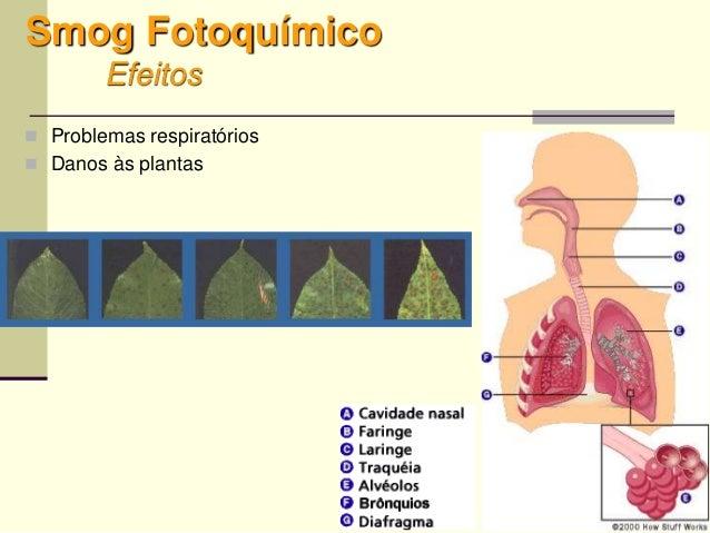59 Smog Fotoquímico Efeitos  Problemas respiratórios  Danos às plantas