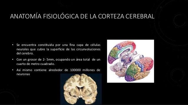 Cap 57 Fisiologia Humana Guyton & Hall \