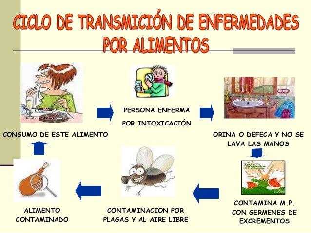 Los microorganismos - Fuentes de contaminacion de los alimentos ...