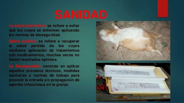 Sanidad en Cuyes  Slide 2