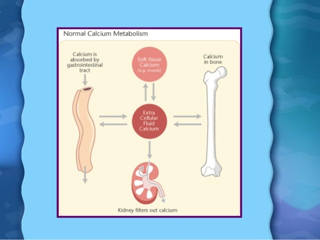 calcium in the body Almost all your body's calcium is stored in bone but the tiny amount that circulates in your bloodstream is disproportionately vital to normal physiology.