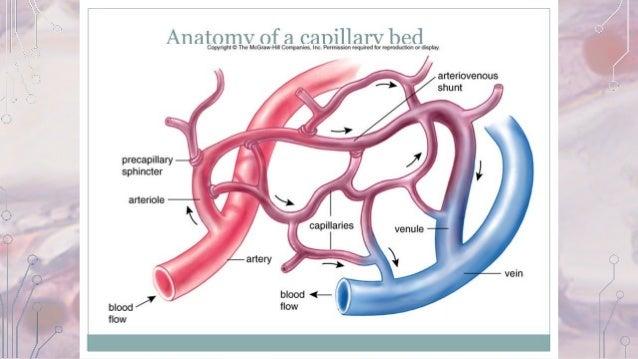 Capillary function