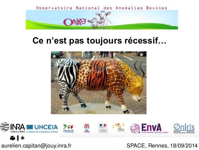 11/10/2013  Ce n'est pas toujours récessif…  Aurélien Capitan  INRA-UNCEIA  aurelien.capitan@jouy.inra.fr SPACE, Rennes, 1...