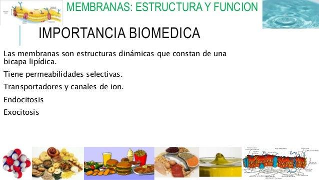 MEMBRANAS: ESTRUCTURA Y FUNCION IMPORTANCIA BIOMEDICA Las membranas son estructuras dinámicas que constan de una bicapa li...