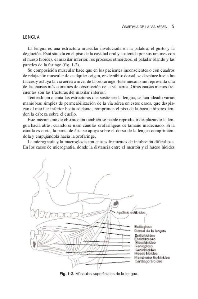 Capítulo 1 anatomía de la vía aérea