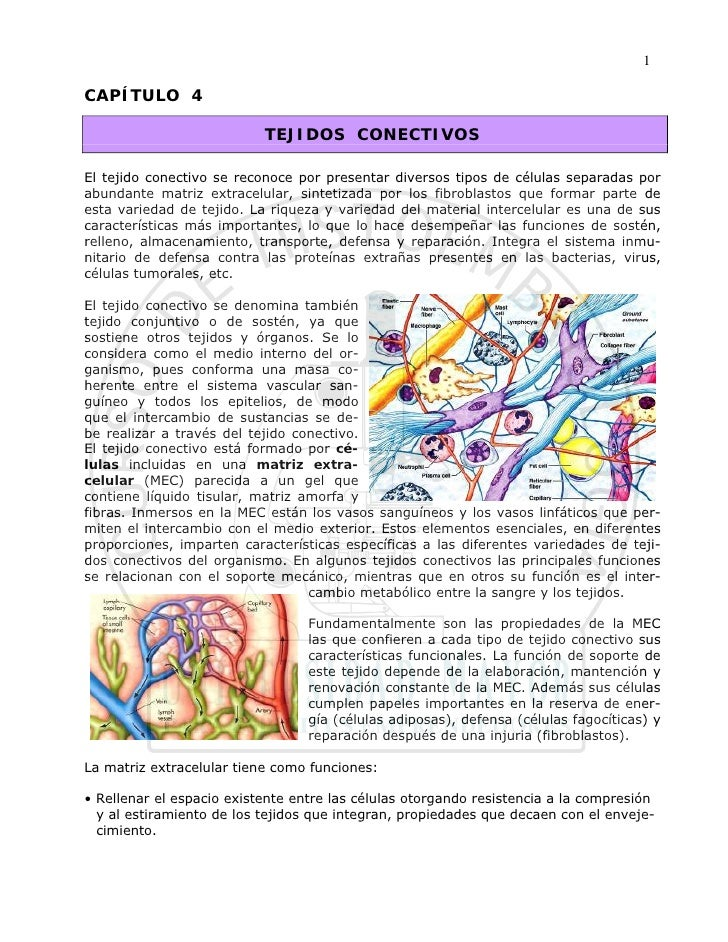 1  CAPÍTULO 4                             TEJIDOS CONECTIVOS  El tejido conectivo se reconoce por presentar diversos tipos...