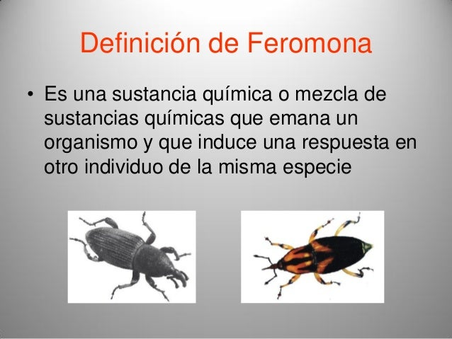 Anatomia de los Insectos