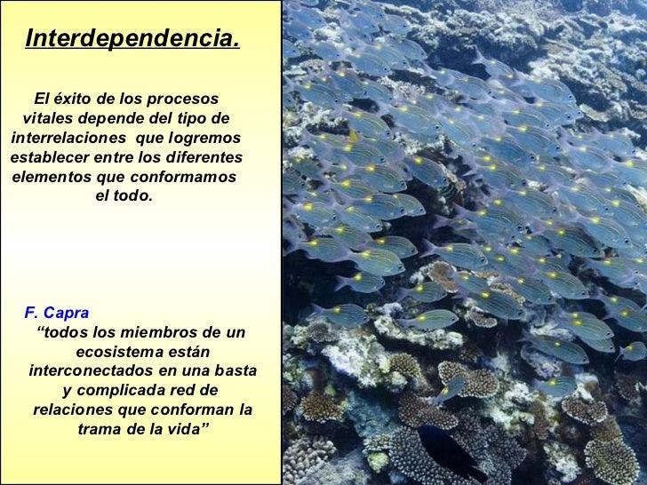 Interdependencia. El éxito de los procesos vitales depende del tipo de interrelaciones  que logremos establecer entre los ...