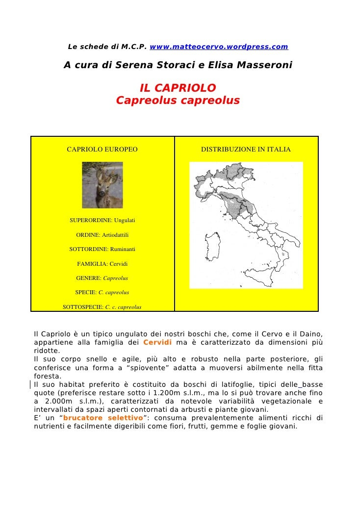 Le schede di M.C.P. www.matteocervo.wordpress.com          A cura di Serena Storaci e Elisa Masseroni                     ...