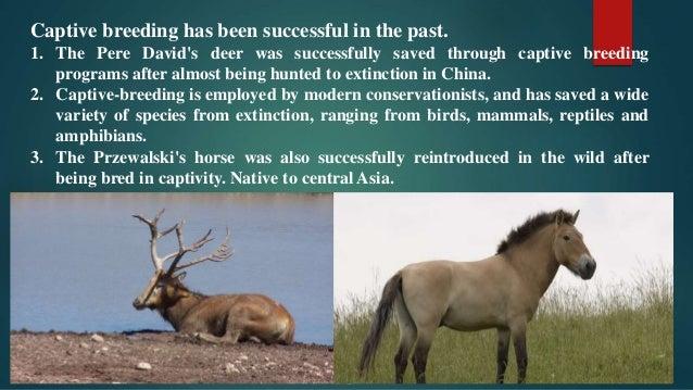 advantages of captive bred animals
