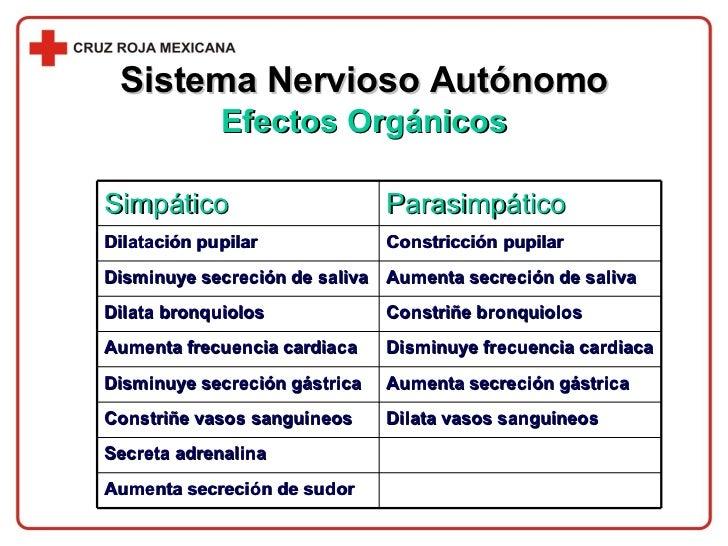 Sistema Nervioso Autónomo Efectos Orgánicos Aumenta secreción de sudor Secreta adrenalina Dilata vasos sanguíneos Constriñ...