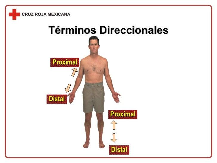 Términos Direccionales Distal Proximal Proximal Distal