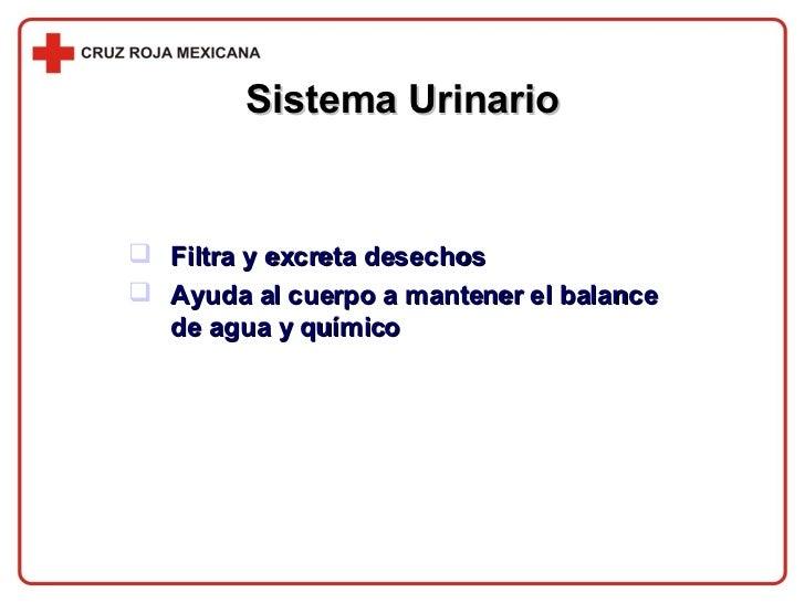 Sistema Urinario <ul><li>Filtra y excreta desechos </li></ul><ul><li>Ayuda al cuerpo a mantener el balance de agua y quími...