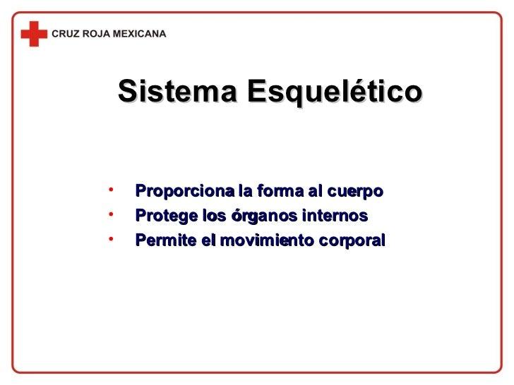 Sistema Esquelético <ul><li>Proporciona la forma al cuerpo </li></ul><ul><li>Protege los órganos internos </li></ul><ul><l...