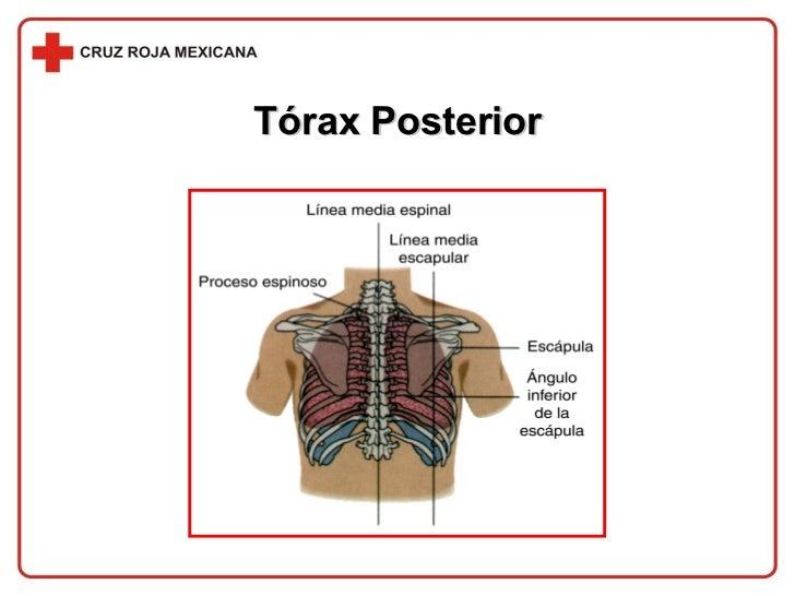 Tórax Posterior
