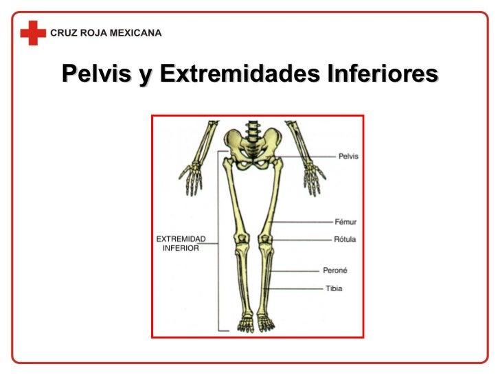 Pelvis y Extremidades Inferiores