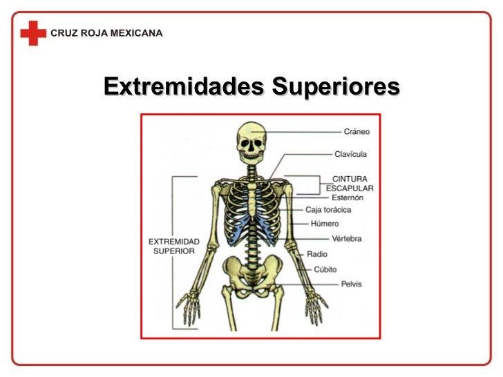 Extremidades Superiores