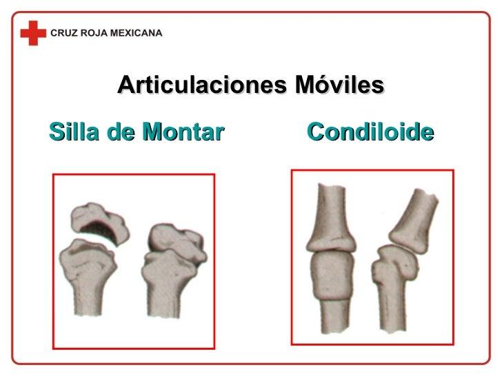 Articulaciones Móviles Silla de Montar Condiloide