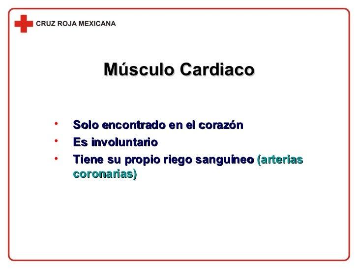 Músculo Cardiaco <ul><li>Solo encontrado en el corazón </li></ul><ul><li>Es involuntario </li></ul><ul><li>Tiene su propio...