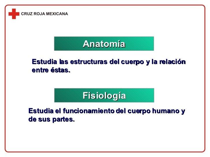 Anatomía Fisiología Estudia las estructuras del cuerpo y la relación entre éstas. Estudia el funcionamiento del cuerpo hum...