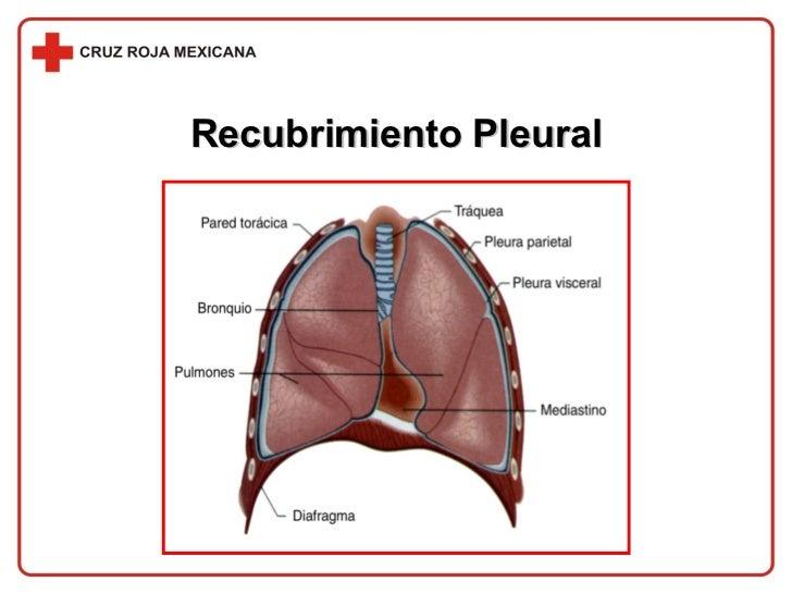 Recubrimiento Pleural