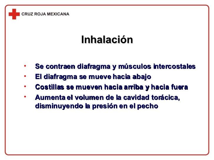 Inhalación <ul><li>Se contraen diafragma y músculos intercostales </li></ul><ul><li>El diafragma se mueve hacia abajo </li...