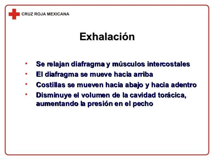 Exhalación <ul><li>Se relajan diafragma y músculos intercostales </li></ul><ul><li>El diafragma se mueve hacia arriba </li...