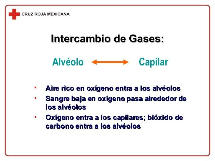 Intercambio de Gases: <ul><li>Aire rico en oxígeno entra a los alvéolos </li></ul><ul><li>Sangre baja en oxígeno pasa alre...