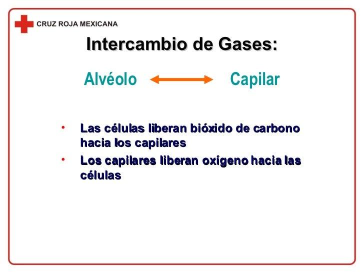 <ul><li>Las células liberan bióxido de carbono hacia los capilares </li></ul><ul><li>Los capilares liberan oxígeno hacia l...