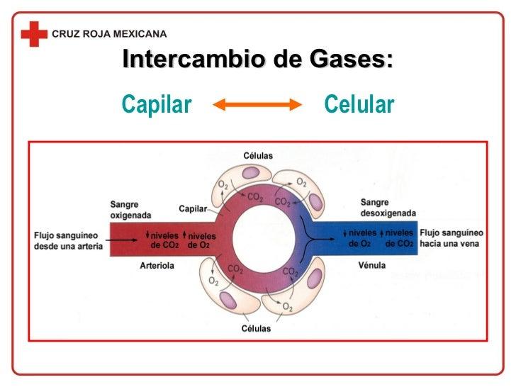 Intercambio de Gases: Capilar  Celular