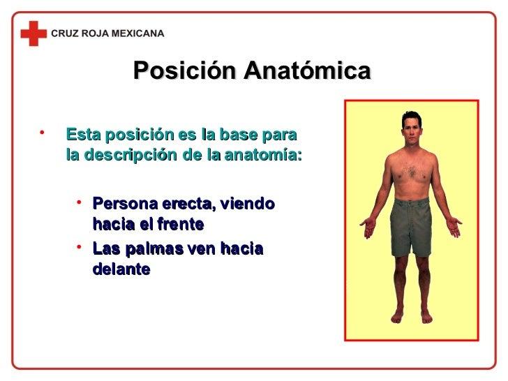 Posición Anatómica <ul><li>Esta posición es la base para la descripción de la anatomía: </li></ul><ul><ul><li>Persona erec...