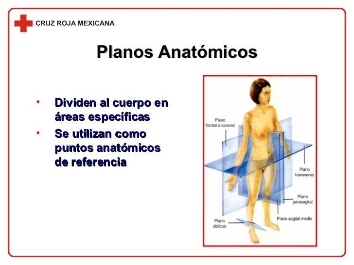 Planos Anatómicos <ul><li>Dividen al cuerpo en áreas específicas </li></ul><ul><li>Se utilizan como puntos anatómicos de r...