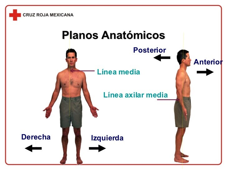 Línea media Línea axilar media Derecha Izquierda Anterior Posterior Planos Anatómicos