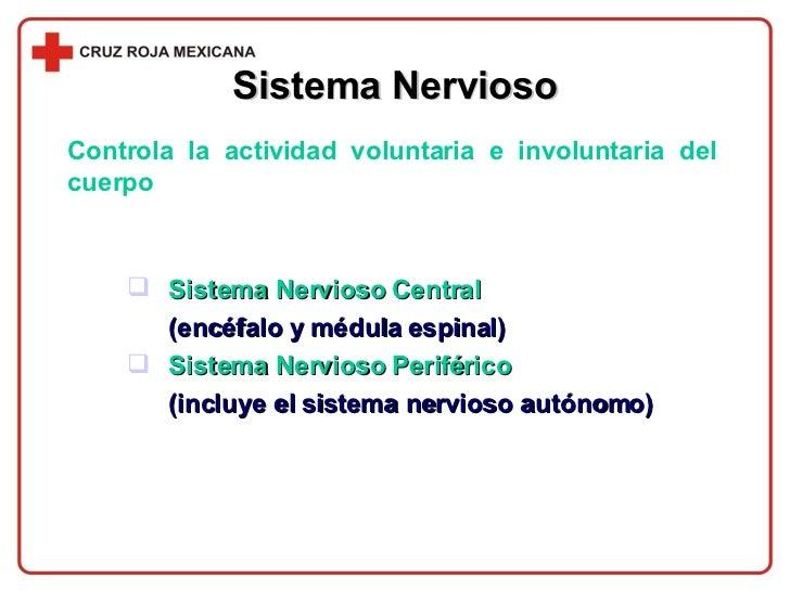 Sistema Nervioso <ul><li>Sistema Nervioso Central  </li></ul><ul><li>(encéfalo y médula espinal) </li></ul><ul><li>Sistema...