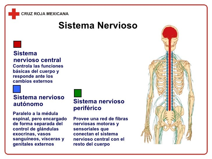 Shock neurogenico