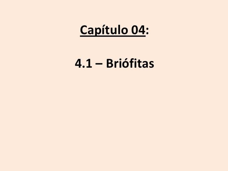 Capítulo 04:4.1 – Briófitas