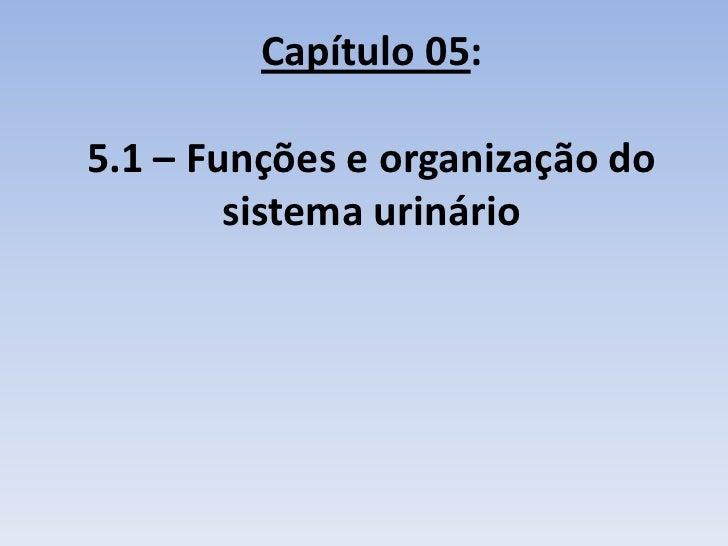 Capítulo 05:5.1 – Funções e organização do        sistema urinário